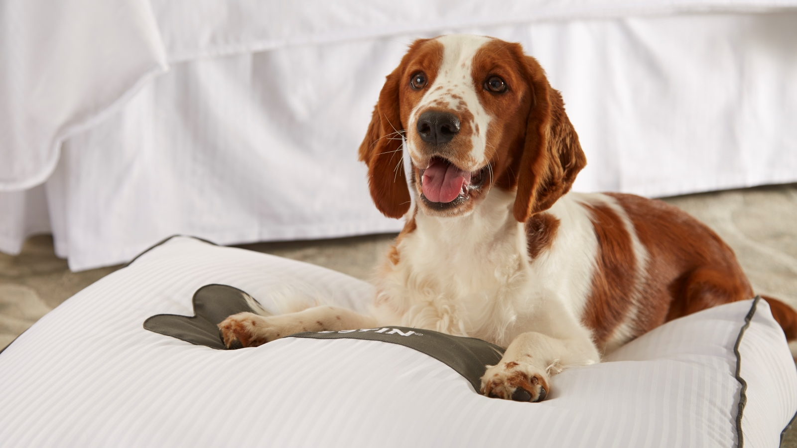 Pet Friendly Hotel in Carlsbad, CA